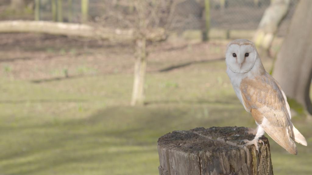 Animal Park and Birds of Prey